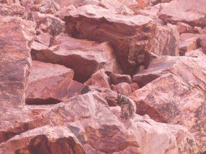 Rock Wallibi Alice Spring Red Center outback downunder