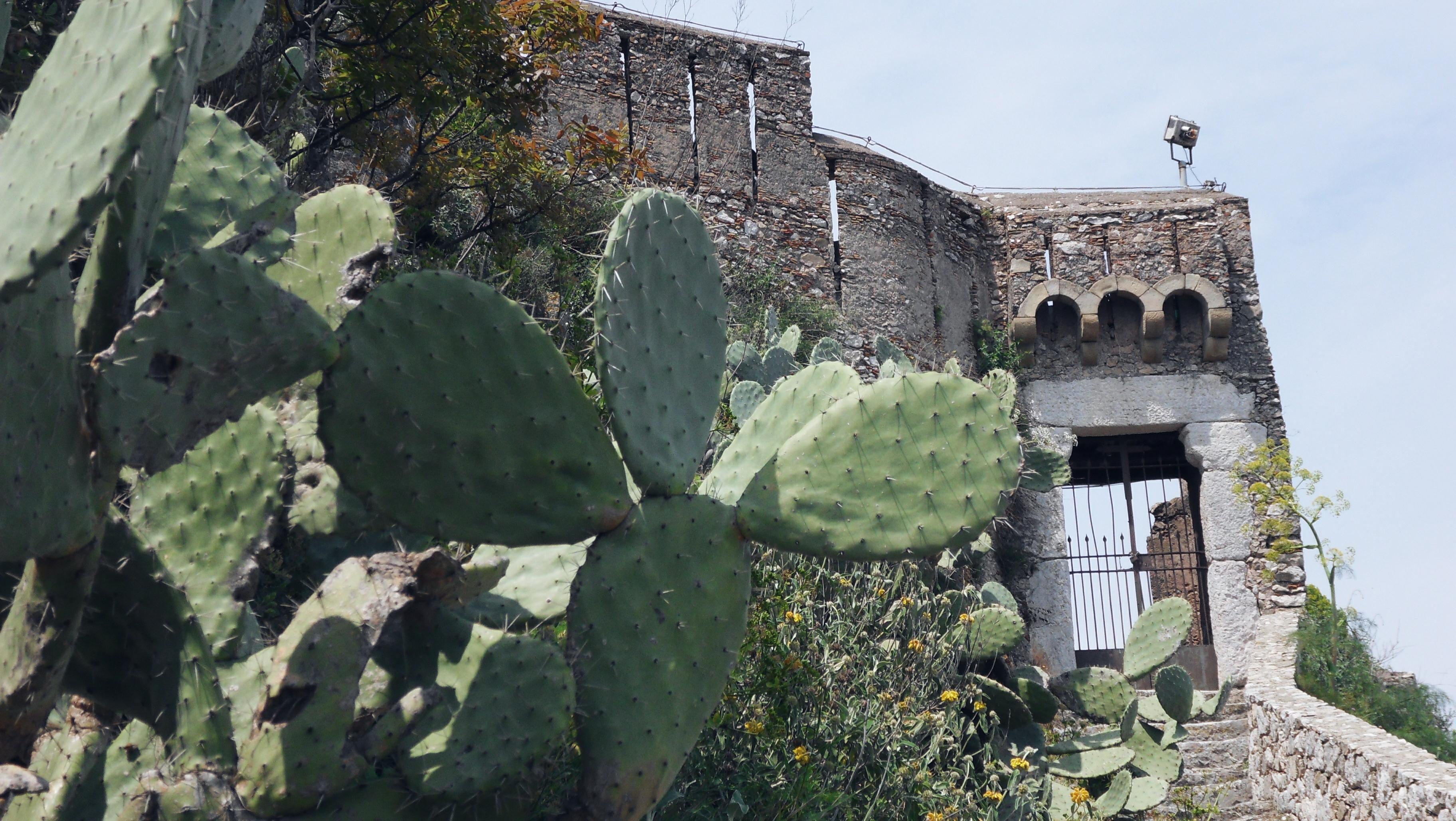 Cactus European tropical Island Sicily
