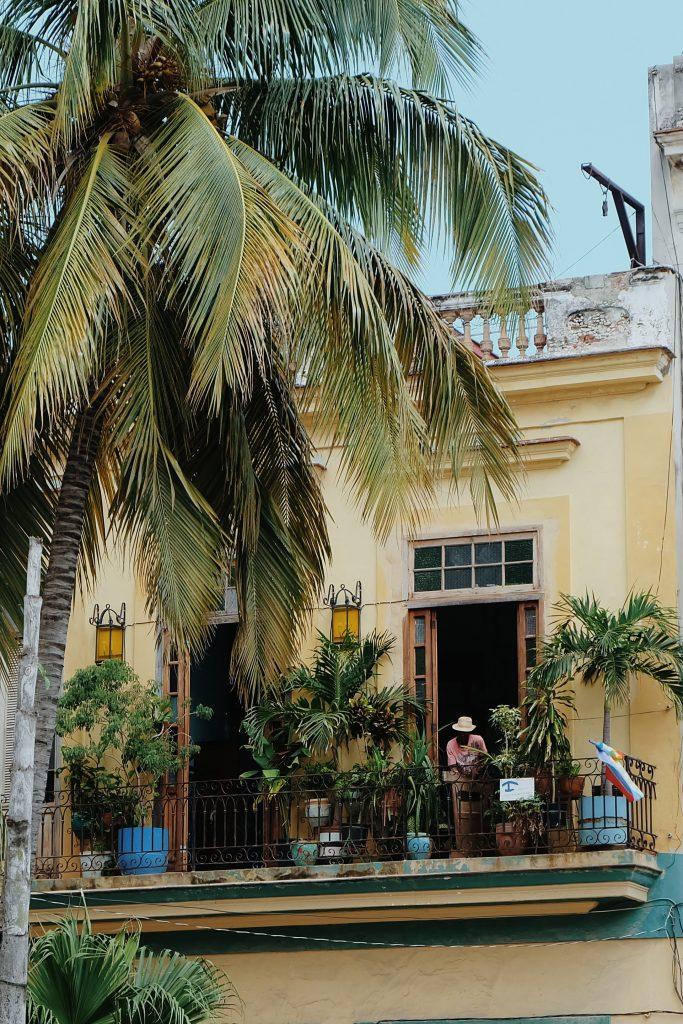 palm trees balcony Havana Vieja