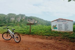 explore Viñales by bicycle