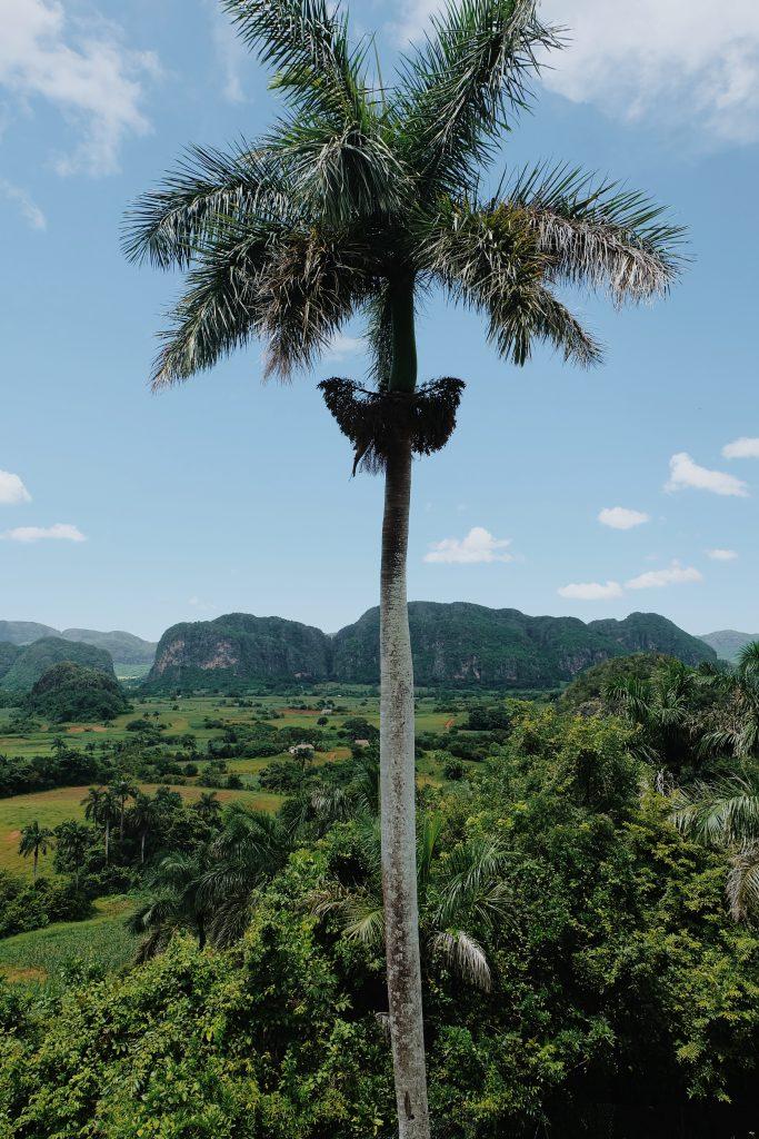 view from hotel Los Jazmines Viñales Cuba