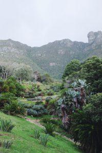Beautiful Kirstenbosch Botanical Garden Cape Town