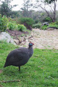 pretty bird Kirstenbosch gardens Cape Town