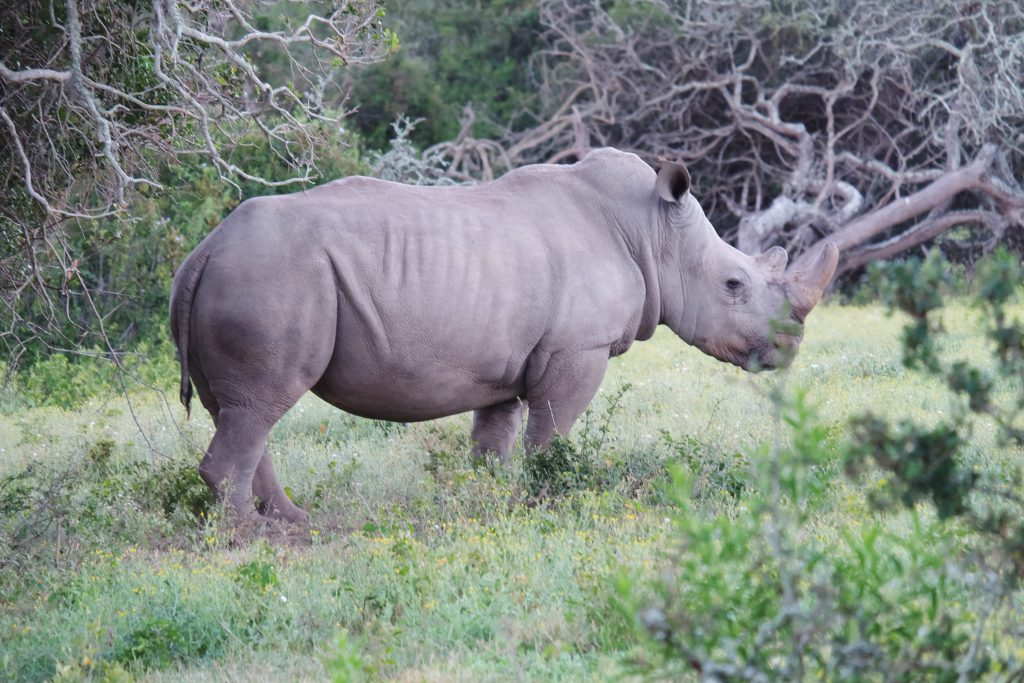 protect Rhino safari South Africa