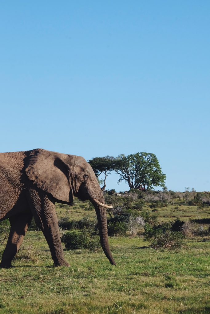 self drive safari Addo South Africa