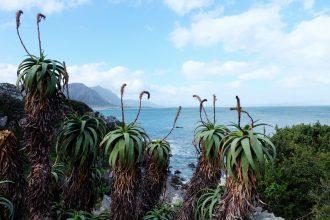 Hermanus SA coastline view